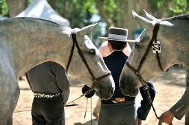 Des enfants et des chevaux